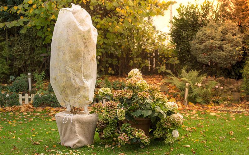Jahres-Schlussakkord im Garten